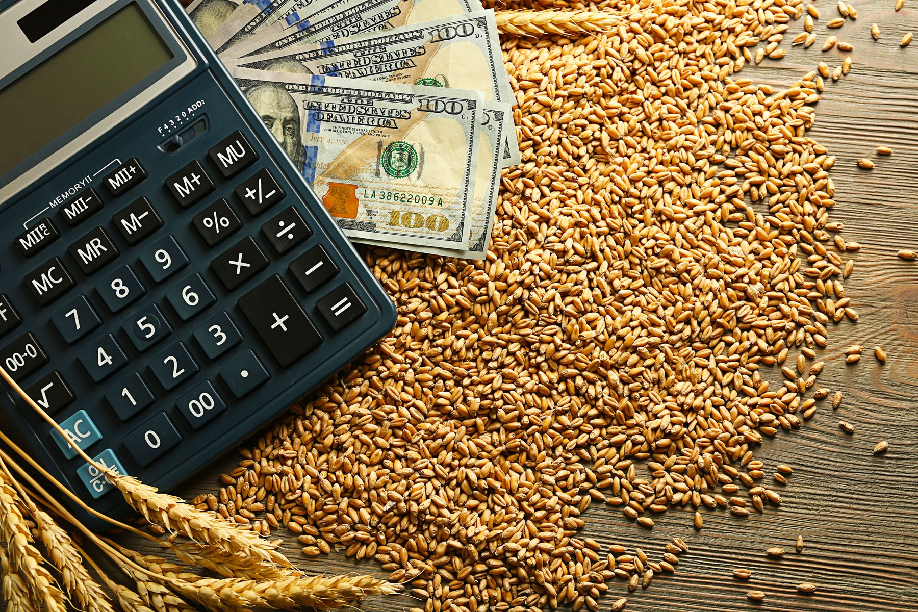 Calculator and cash sitting on top of wheat kernels.